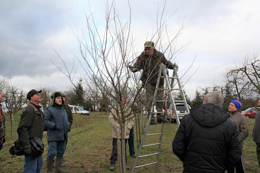 Cours de taille d'arbres fruitiers