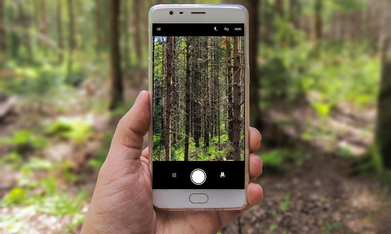 Nouveau regard sur la forêt