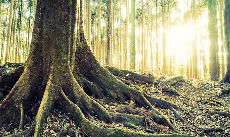 Éveil matinal en forêt