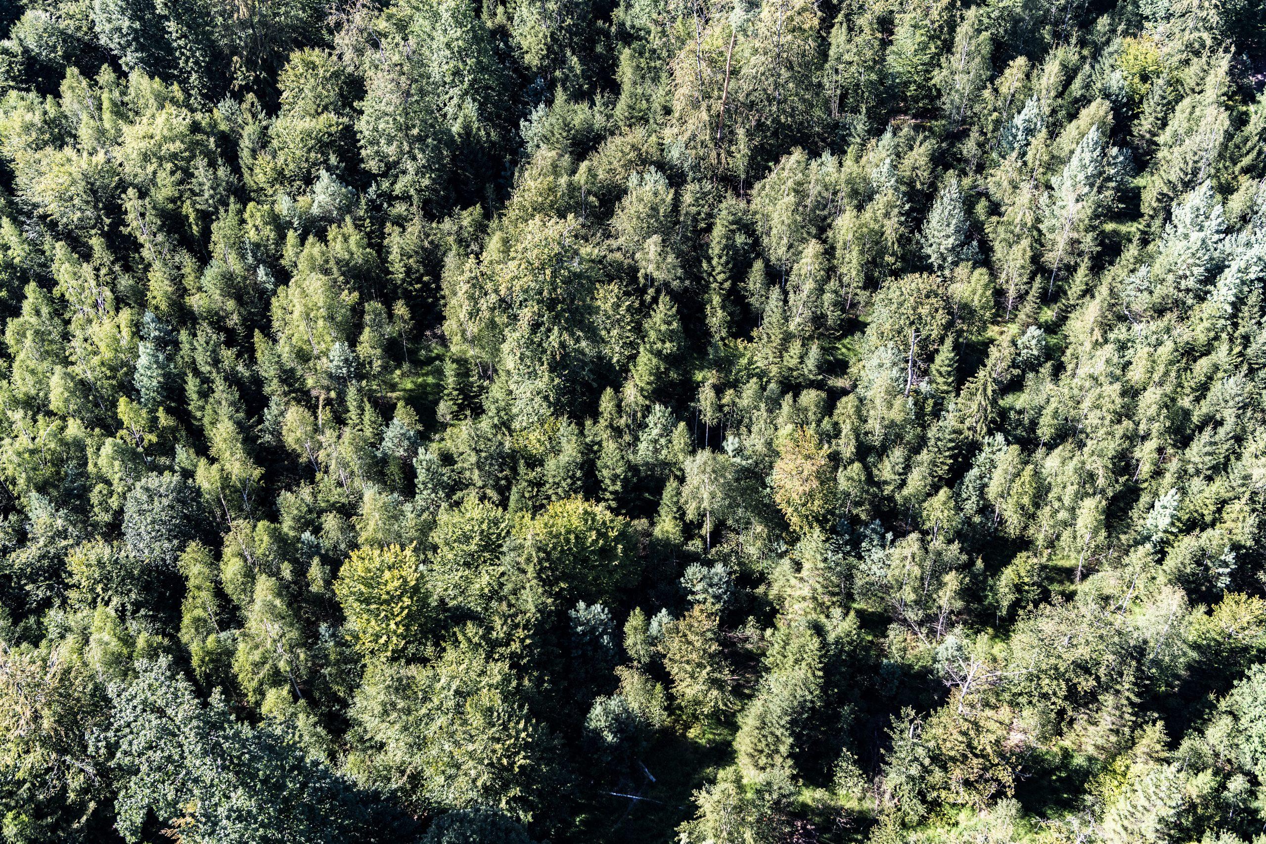 """Jeu de piste """"La Forêt face aux changements climatiques"""""""