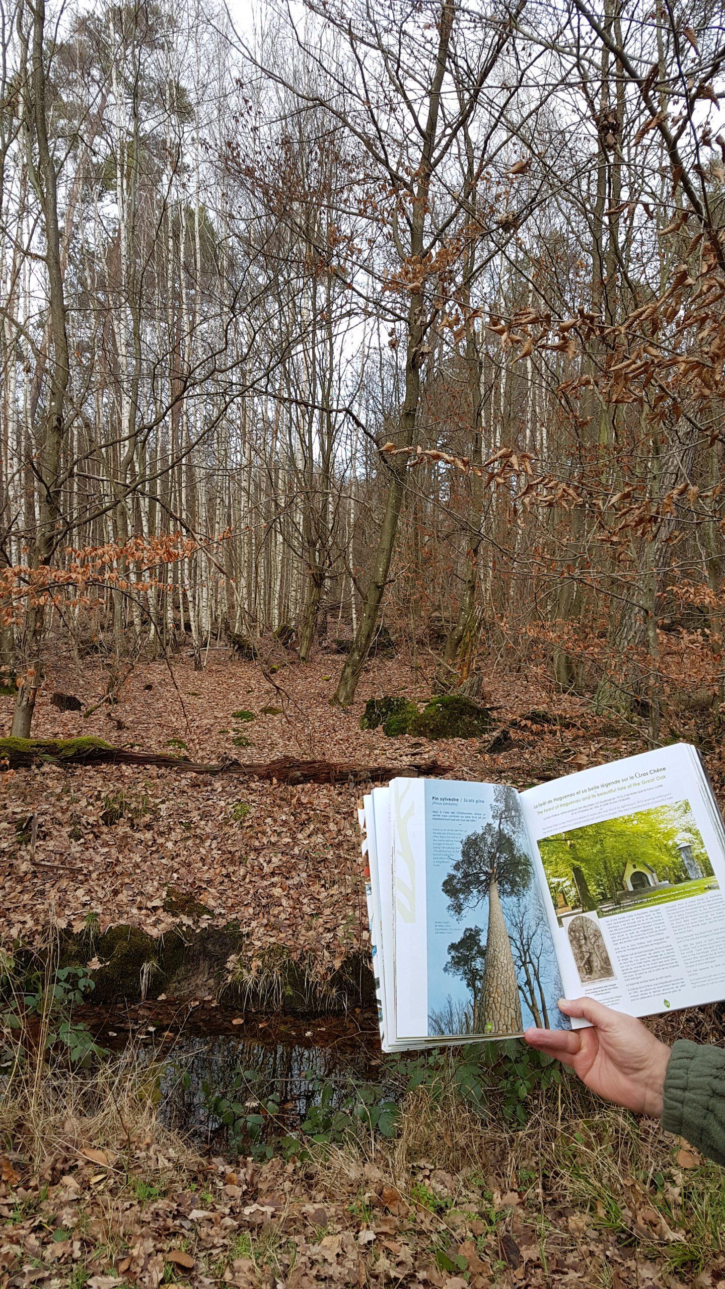ANNULÉ : La forêt au cœur des mots