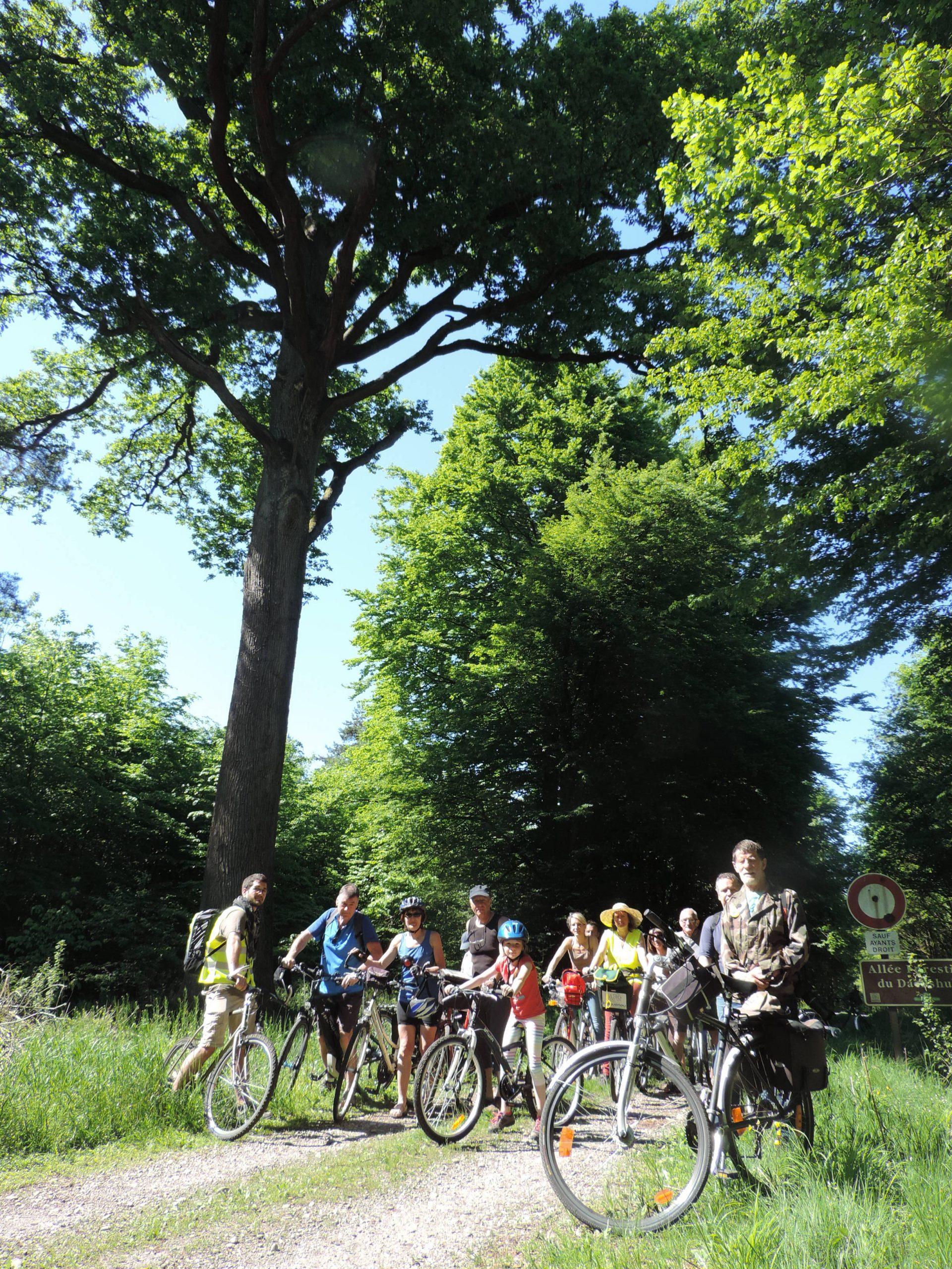 Sur la piste des arbres remarquables - balade à vélo