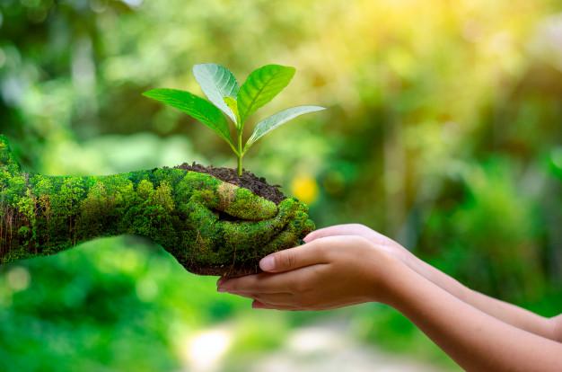 Sylvothérapie Renouer avec la Nature