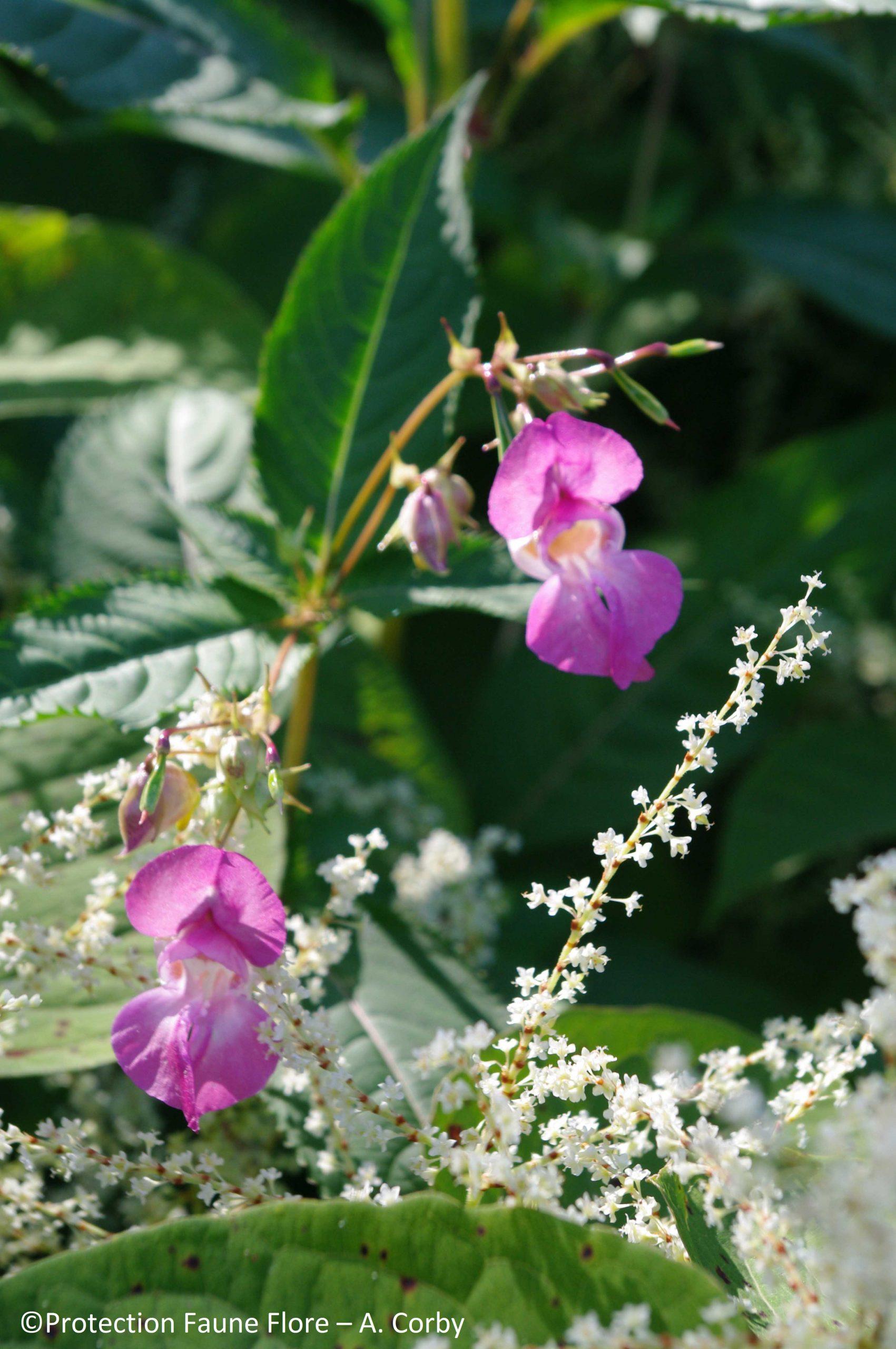 Les plantes en forêt : d'ici et d'ailleurs