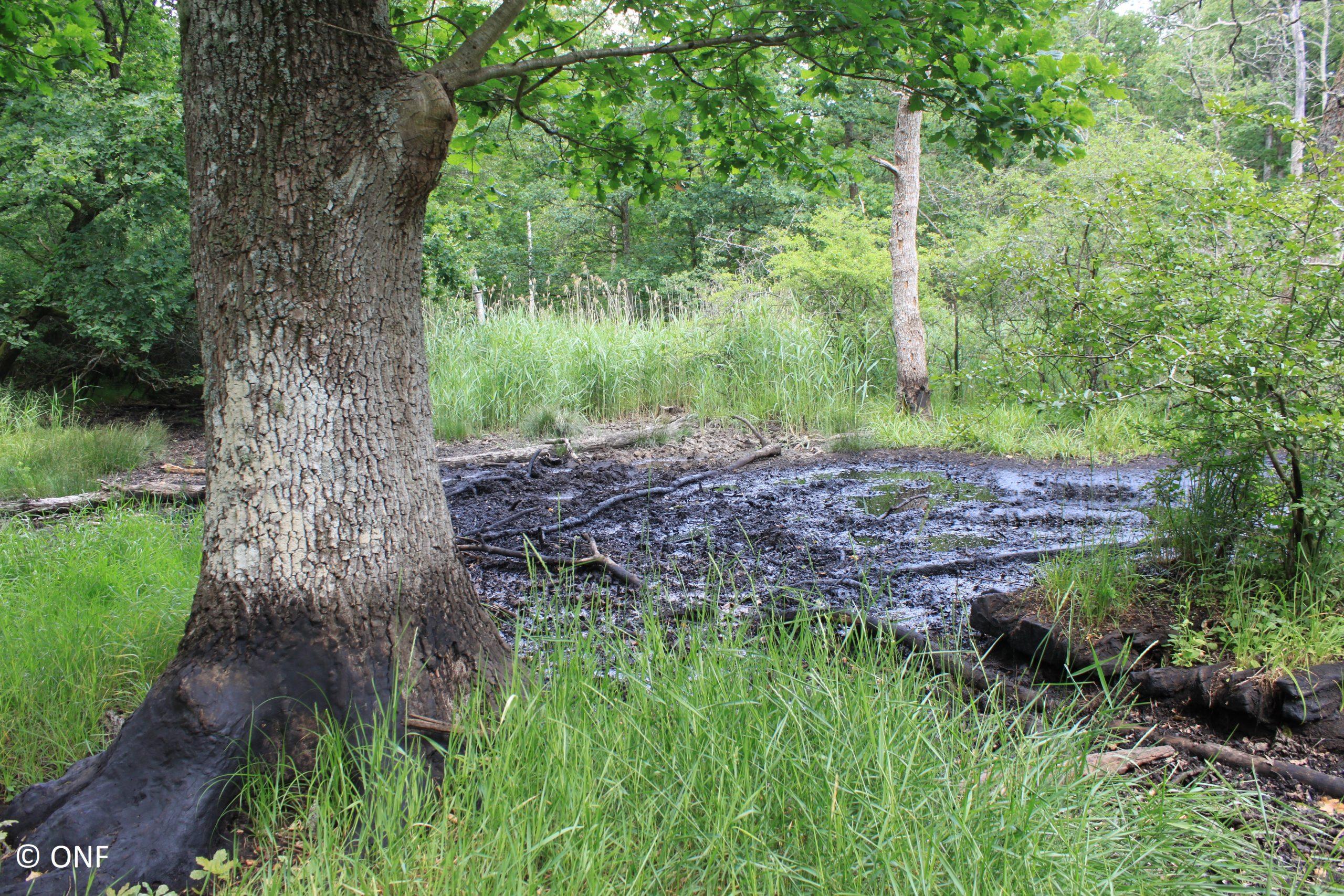 Le pétrole en forêt, à la découverte d'une exploitation historique