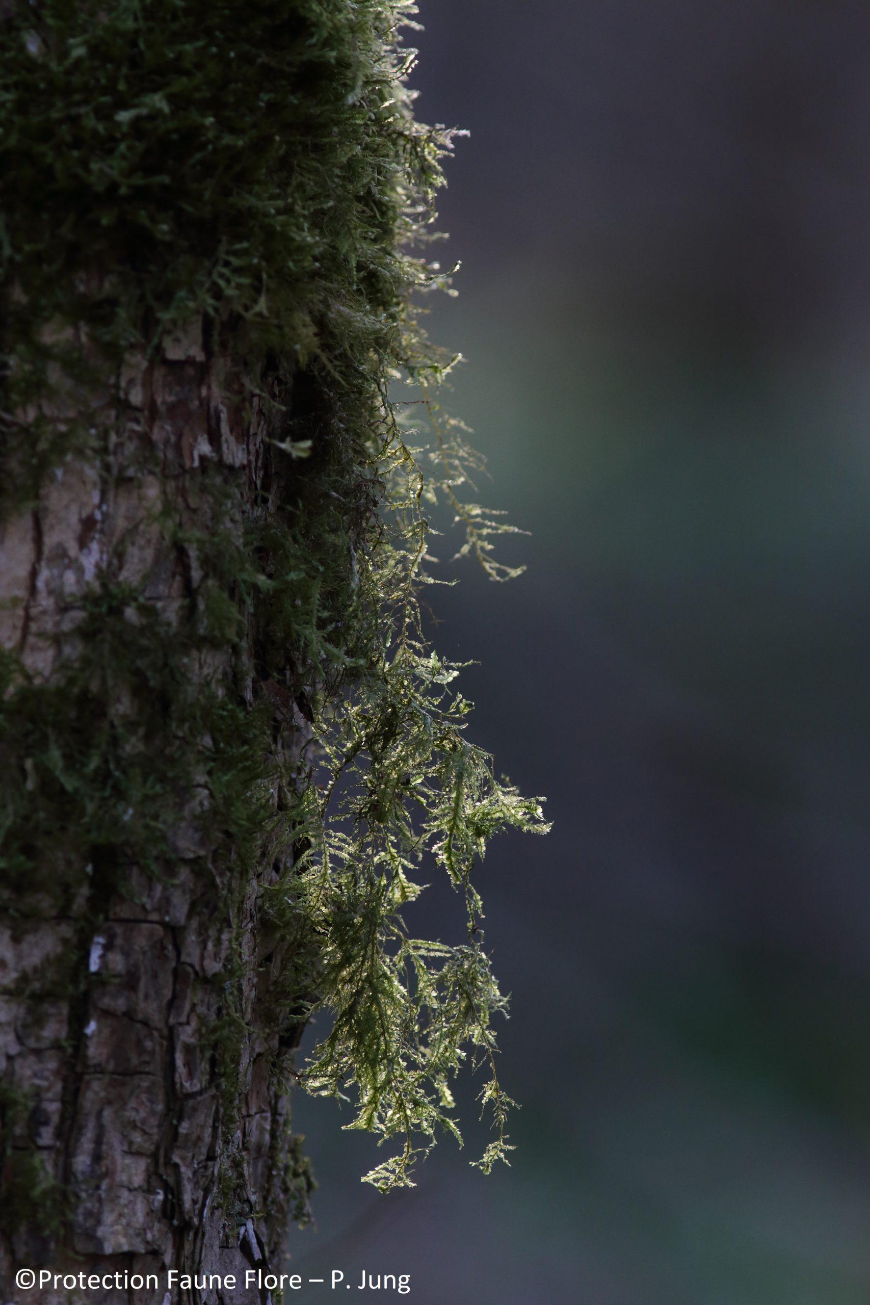 Nature et solidarité