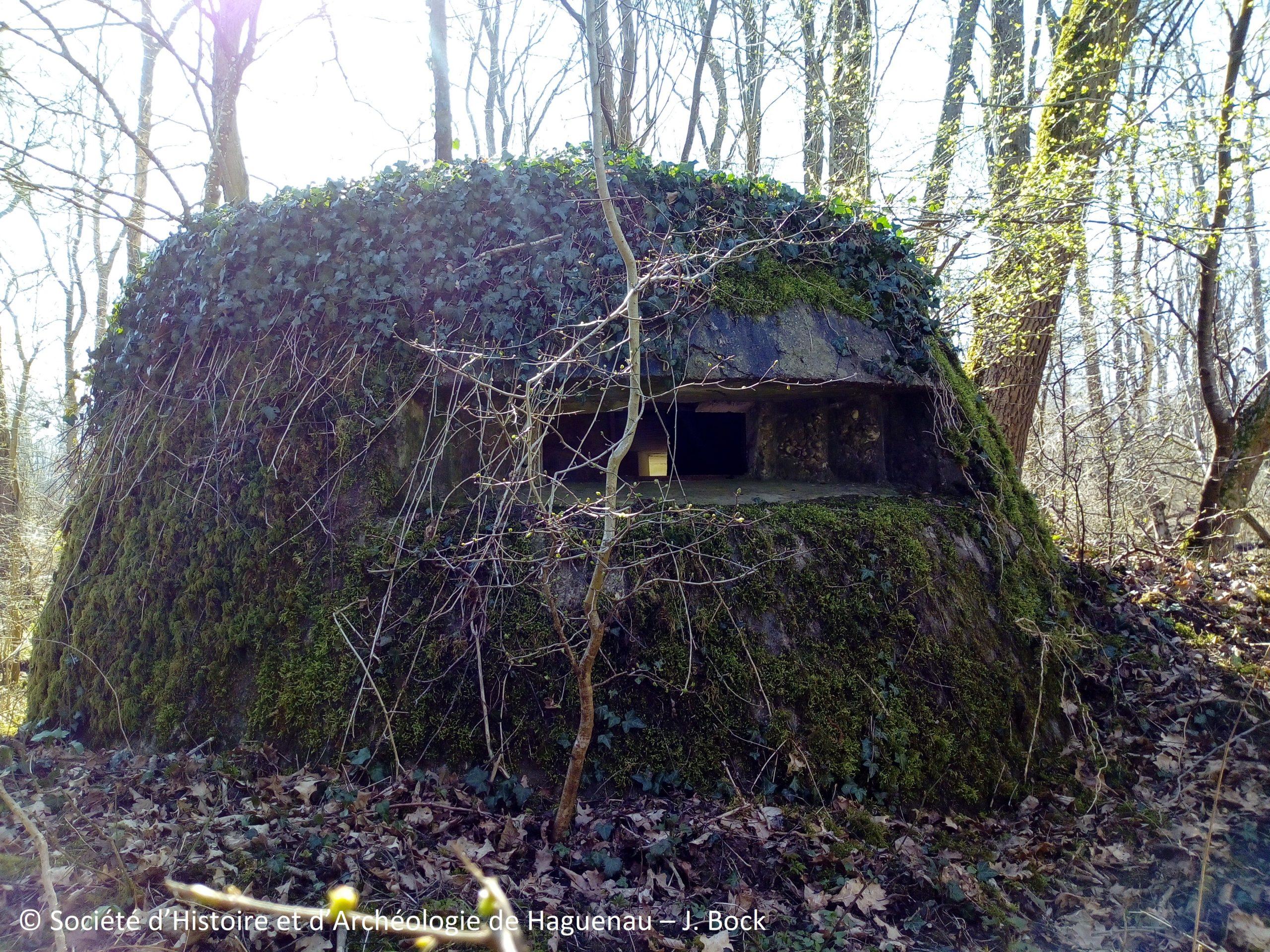 Vestiges de guerre en forêt