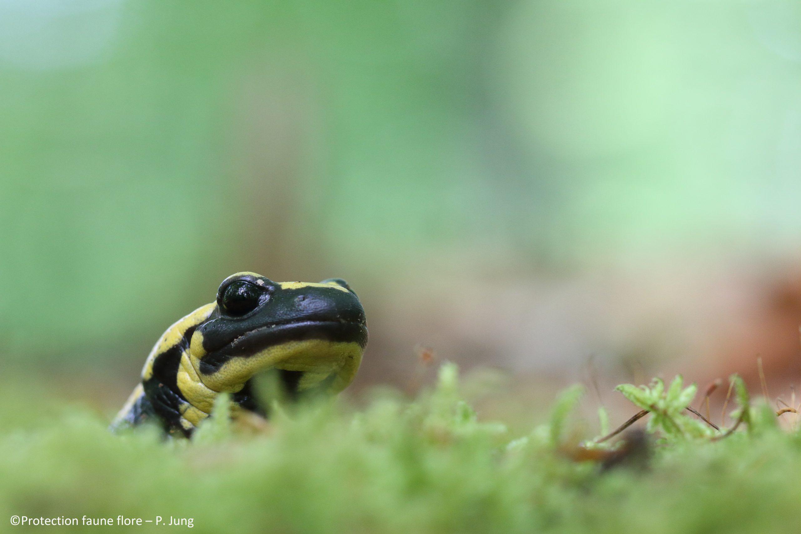 Natura 2000 ou gestion durable de la forêt