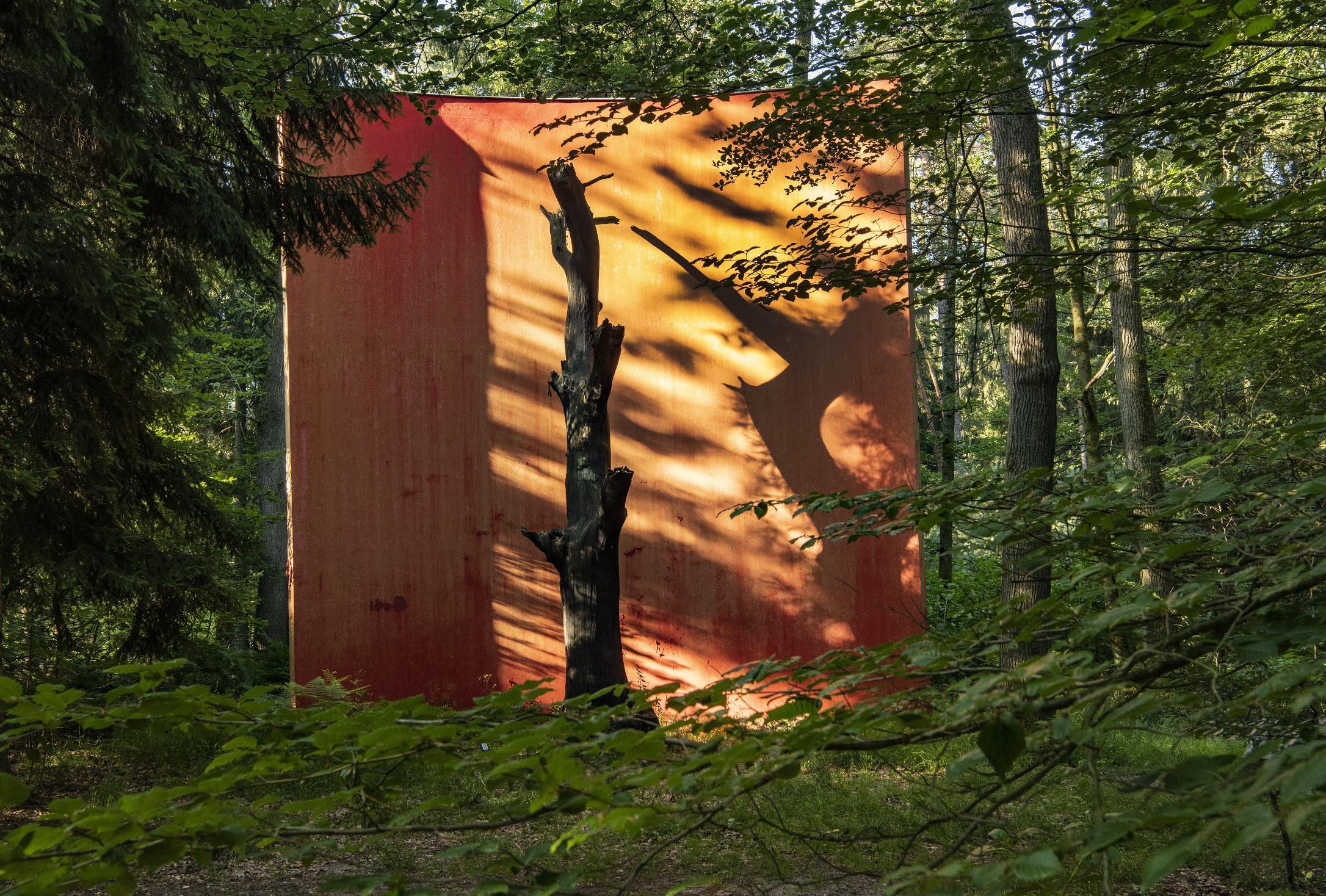 Coup de projecteur en forêt ! – Balade guidée au Monument du Chêne
